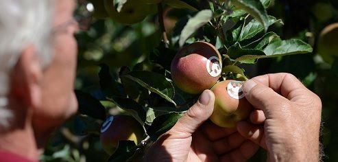 Wie kommt der Smiley auf den Apfel?