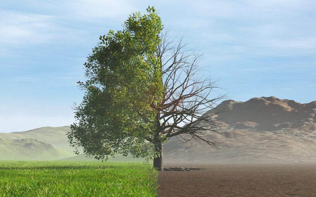 Dürrejahre: Deutscher Wald leidet unter Trockenheit