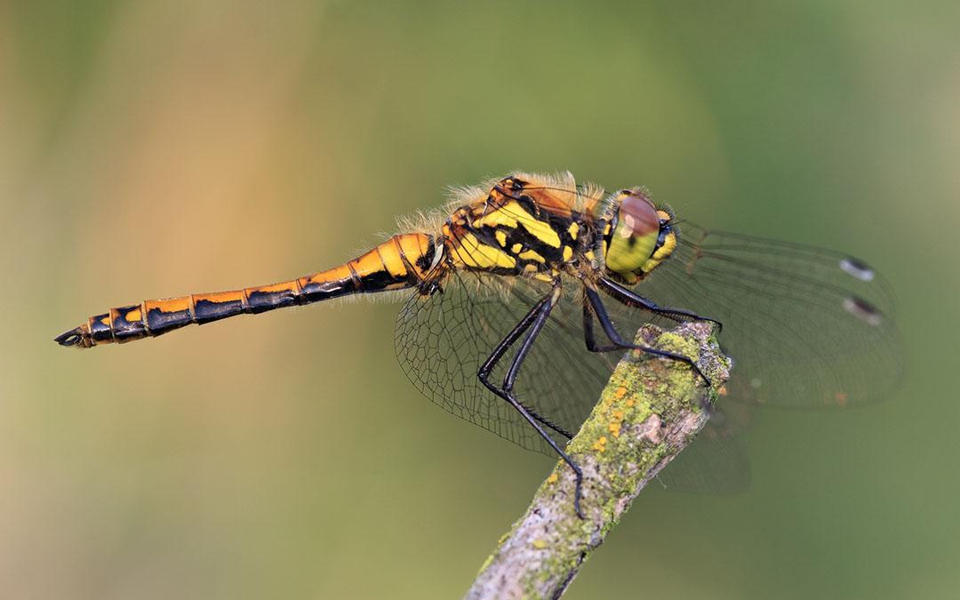 Tag der Artenvielfalt: Kampf gegen Artensterben