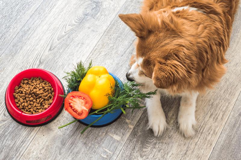 Nachhaltiges-Tierfutter- Gemüse im Napf