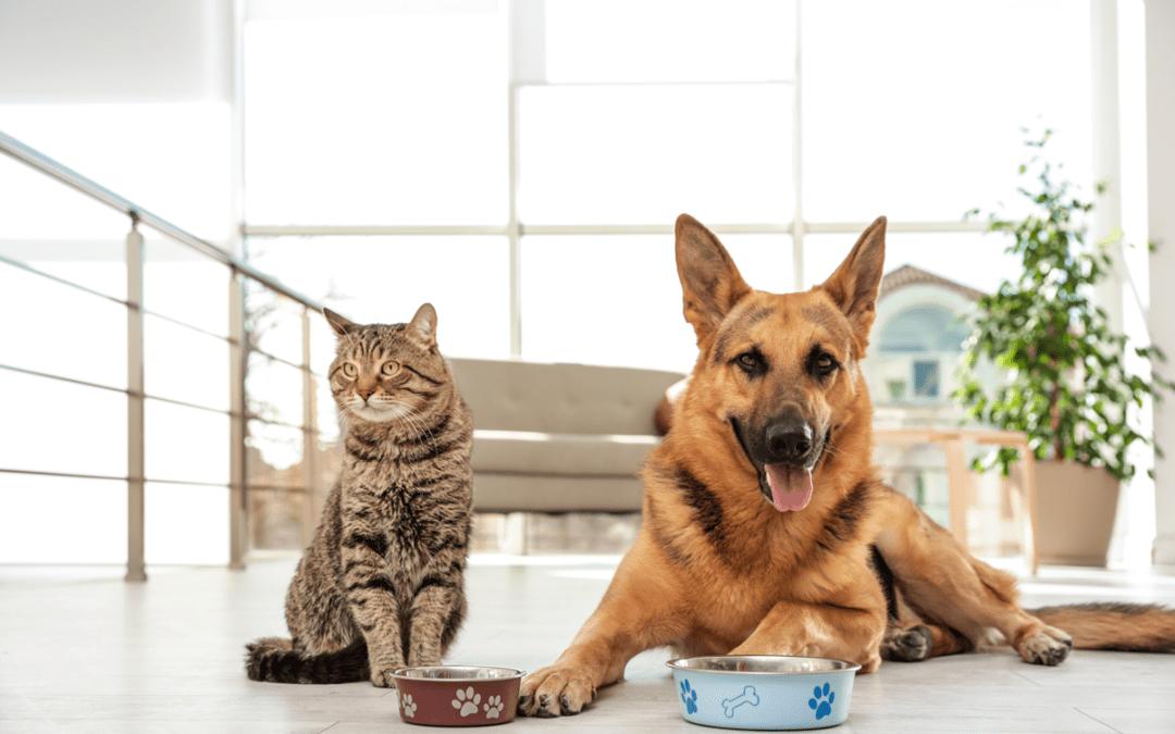 Blick in den Napf: Nachhaltiges Tierfutter verbessert die Klimabilanz von Haustieren
