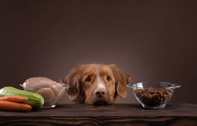 Nachhaltiges-Tierfutter- Abwechslungsreiche Ernährung