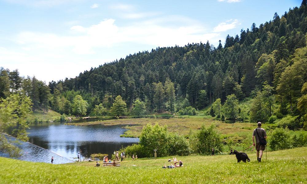 Ausflugstipp am Wasser im Schwarzwald ist der Nonnenmattweiher