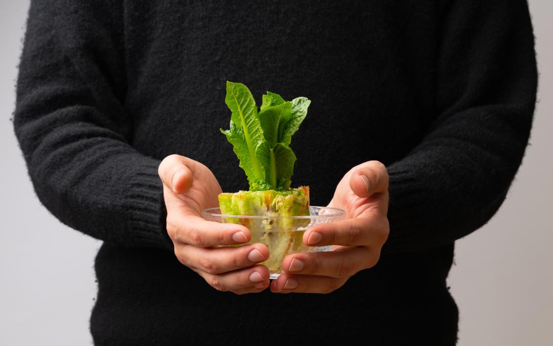 Regrowing: So ziehst du aus Küchenabfall neues Gemüse