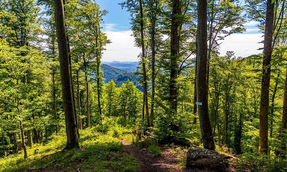 Ausflugstipp im Schwarzwald ist der Schluchtensteig