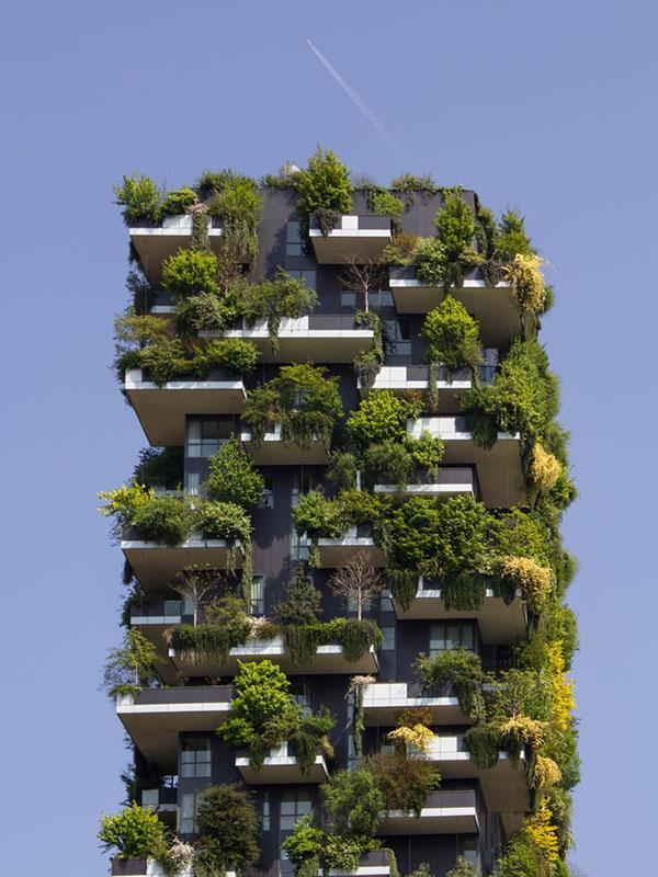 Begrünte Fassaden helfen einen Wohnung im Sommer kühl zu halten.