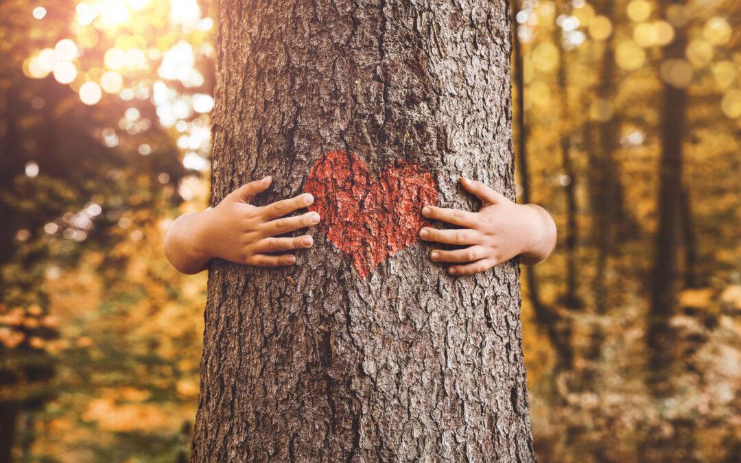 Waldschutz: warum die Erhaltung der Wälder so wichtig ist