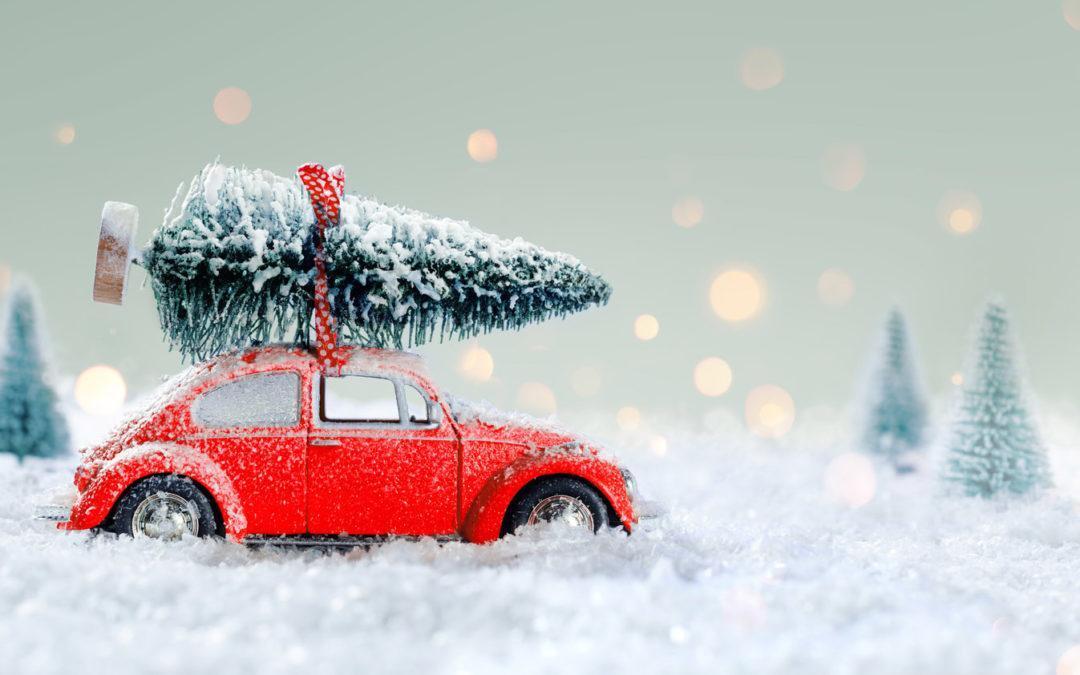 Nachhaltiger Weihnachtsbaum: Regional, Bio oder Plastik?