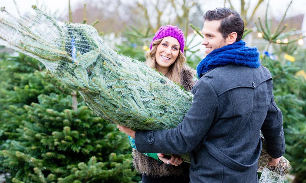 Paar kauft Weihnachtsbaum