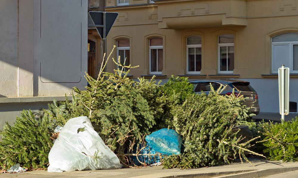 Alte Weihnachtsbäume auf der Straße