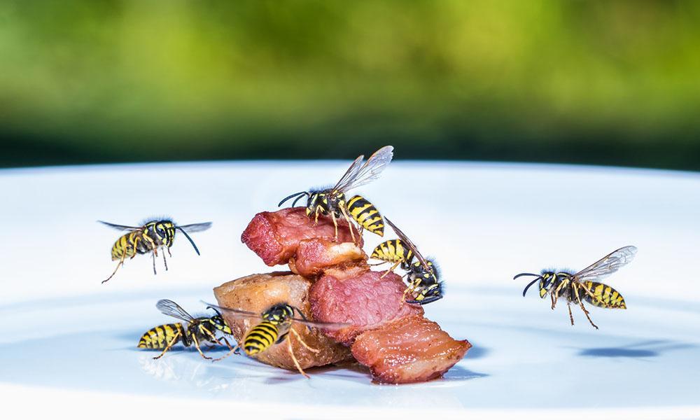 Wespen schützt der Tag der Aertenvielfalt