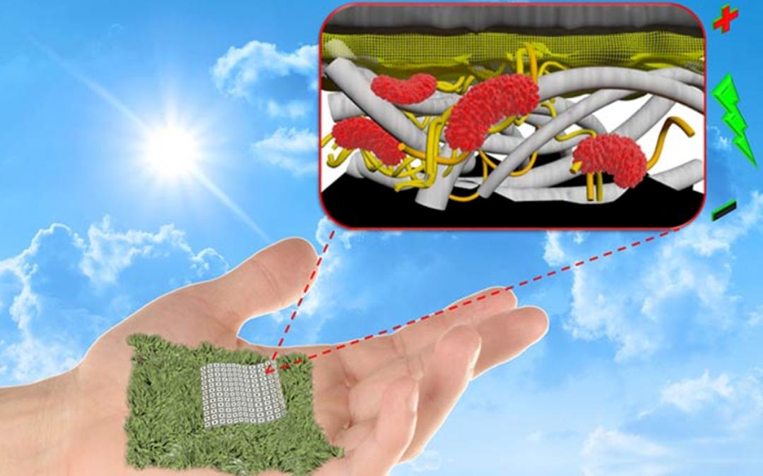 Umweltfreundliche Batterie: Strom aus Papier und Bakterien