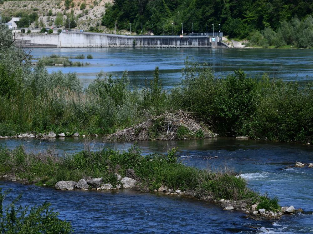 Eine Biberburg liegt auf einer kleinen Insel in der Mitte des Umgehungsgewässers des Wasserkraftwerks Rheinfelden.